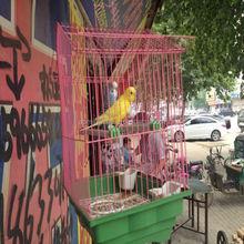 cheap welded wire mesh decoration bird cage