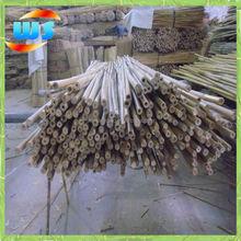 Utilizzato per il giardino di bambù canna 5ft 14/16mm