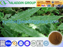 2013 SGS certificates/ GMP standard Horny goat weed extract / HPLC10%,15%20%,50% 98% Icarin/Icaritin