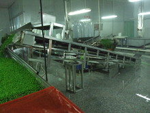 IQF green peas with BRC,OU KOSHER ,HALAL certificates