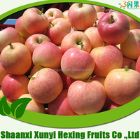 export fresh apple shaanxi apple fruit gala apple for sale