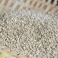 High quality Chenopodium quinoa grain