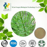 Low price Horsetail P.E. & Horsetail Leaf Extract