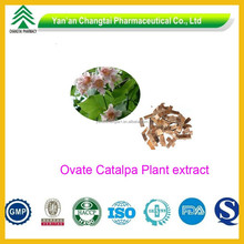 GMP Certificated Chinese Herbe High Quality Ovate Catalpa Plant Extract 10:1 20:1