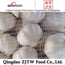 normal white garlic,china garlic rates