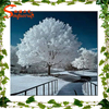 /product-gs/factory-manufacture-10m-white-artificial-pine-tree-for-wedding-centerpiece-decoration-wooden-banyan-bonsai-60331304403.html