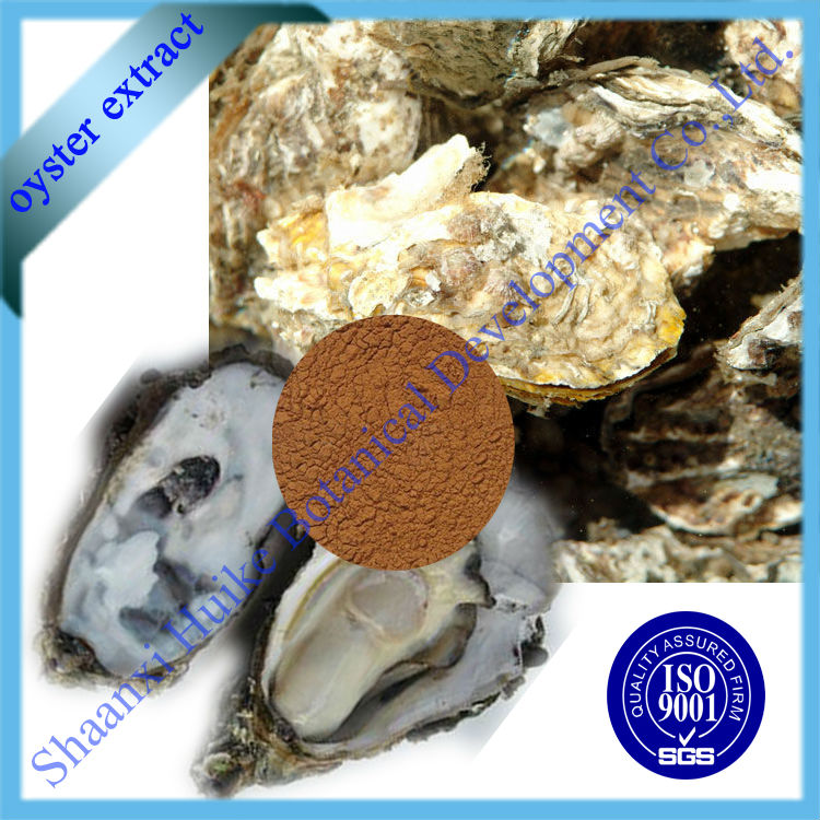Bulk Oyster Shells High Quality Oyster Shell Extract