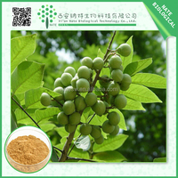 High Quality natural plant Sapindaceae extract powder mukurozisaponin sapindoside
