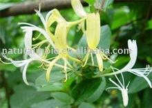 Honey Suckle Flower 25%chlorogenic acid(UV)