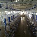 Sistema de Leche medidor de flujo Arenque Hueso Sala de ordeño