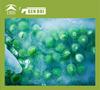 Frozen green peas vietnam iqf green peas vietnam iqf green peas