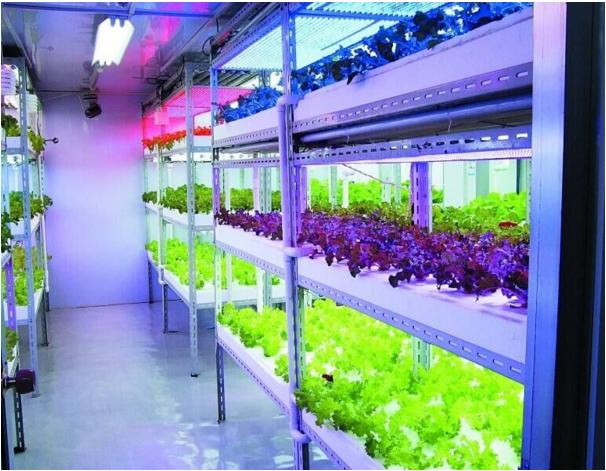 Best led strip grow plant light for micro greenscp200 3ft 90cm 40w best led strip grow plant light for micro greens3ft 4ft 60w waterproof aluminium led aloadofball Choice Image