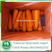 China new 2015 Fresh Carrot fresh vegetable importers in Singapore