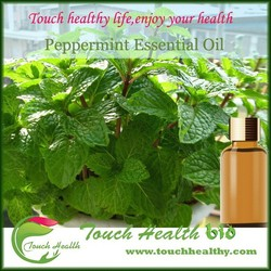 Best quality mint oil with low price