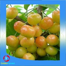 850g yellow Canned Cherry In Heavy Syrup(haccp)