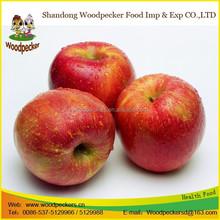 wholesale prices apple fruit