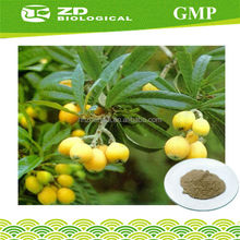 GMP Factory Supply Organic Loquat Leaf Extract in Herbal Extract