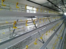 China factory best-selling high quality bird cage chicken wire mesh fence chicken cage for sale welded wire mesh panels chicke