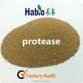 Proteasa enzima usado en todo tipo de industrias
