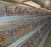 Henan Poul Tech chicken grilling equipment/chicken laying cage/pullet chicken cage