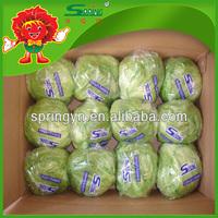 Chinese Fresh Vegetables Supplier of Organic Iceberg Lettuce
