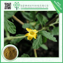 2015 best quality 4:1 10:1 20:1 Damiana extract /free sample Damiana leaf powder/Damiana powder