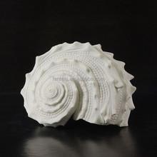 ocean series conch shell ornament