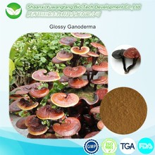 Health food anti-cancer natural herbal reishi mushroom extract,ganoderma lucidum extract