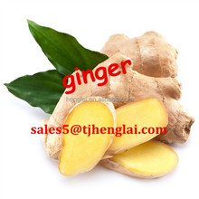 chinese air dry ginger price and exporters 2015