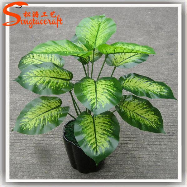 Noms de plantes pots en plastique pour plantes plantes for 5 nombres de plantas ornamentales