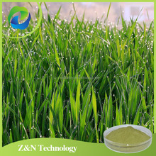 High quality young wheat grass powder in bulk 10:1,20:1