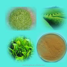 Made in China Green Tea Extract Tea Polyphenol GTP