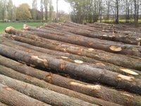 Pine, Oak, Spruce logs for sale, excellent price