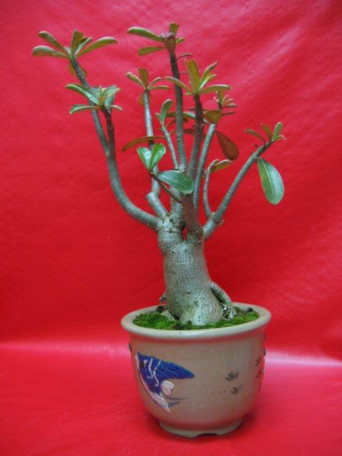 Vintage Flower Pots For Sale Buy Vintage Flower Pots Product On
