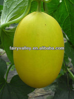 High Yield High Disease Resistance Hybrid F1 Golden Yellow Peel Orange Red Flesh Sweet Melon Seeds F1 For Sale-Fly High