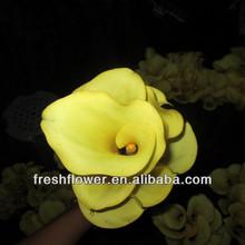 fresco de flores de lirio callas