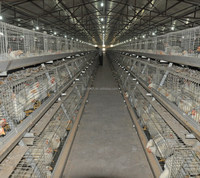 Layer egg broiler chicken cage from professional factory!