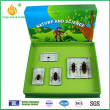 Teaching aids for children life cycle of cockroach specimen
