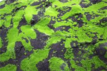 Home garden china decoration 100cmx200cm black mat artificial holland moss turf EZMD03 0204