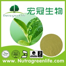 manufacturer stable green tea extract / green tea extract powder