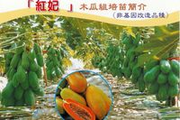 2015 Hybrid F1 High Yield Red Lady Papaya Seeds For Growing