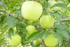High quality fresh apple chinese apple fruit gala apple for sale
