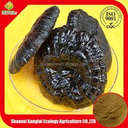 Natural Reishi Mushroom Extract Powder/Triterpenes 1%, 2% Reishi Powder