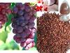 Sale Bulk Grape Seed Extract softgel