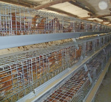 Lowest price battery pullet chicken cage/chicken breeding cage