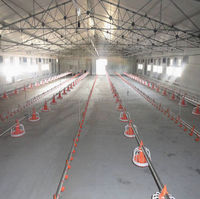 poultry chicken cage for broiler house in Kenya(layer chicken ,broiler chicken,day old chick)