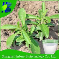 Manufacturer Supply High Quality Stevia/Stevioside /Stevia Extract/Stevia Sugar