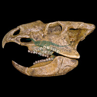 Life Size Fiberglass Animals Skull Heads Decoration
