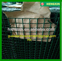 1/2 Inch Plastic Coated Welded Wire Mesh/Welded Wire Mesh 50x50/Coated Welded Mesh