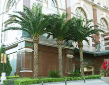 Hot selling products artificial outdoor plastic canary date palm trees for decoration wholesale